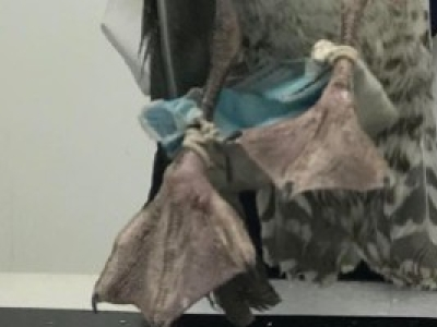 Ideas When Buying A Temporary Fence for Construction